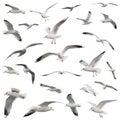 White Birds fijó. aislado Imágenes de archivo libres de regalías