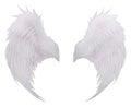 White birds wing feather,plumage isolated white background use f Royalty Free Stock Photo