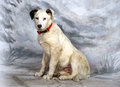 White with black spots puppy Royalty Free Stock Photo
