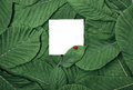 White blank sheet among the green leaves Royalty Free Stock Photo