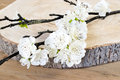 White blossom. Royalty Free Stock Photo