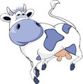 White blue cow Stock Photos