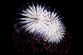 White blue red amazing fireworks on dark background close up. Royalty Free Stock Photo