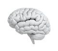 White brain Stock Images