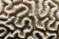 White brain coral Royalty Free Stock Images
