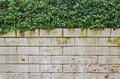 White brick wall with Green leafs Royalty Free Stock Photo