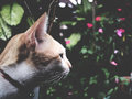This is a white - brown cat in the garden, soft tone
