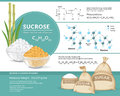 White and brown sugar cubes in bowls. Structural chemical formula and model of sucrose