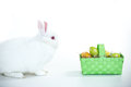 White bunny facing wicker basket easter eggs white background Royalty Free Stock Photo