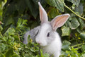 White bunny little rabbit in green grass Royalty Free Stock Image