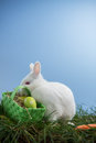 White bunny rabbit sitting grass basket eggs blue background Stock Photo