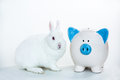 White bunny sitting blue white piggy bank white background Stock Photo
