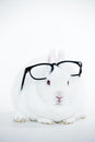 White bunny wearing human glasses its head white background Royalty Free Stock Image
