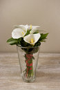 White Calla Lilies In The Vase...