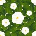 White Camellia Flower on Ivory Beige Background. Vector Illustration.