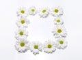 White camomile frame on white Royalty Free Stock Photo