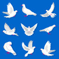 White cartoon pigeon with red beak and paws illustrations set