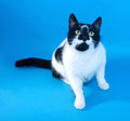 White cat with black spots sitting looking up on blue background Stock Image