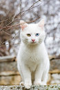 White cat with different colored eyes - vertical orientation Royalty Free Stock Photo