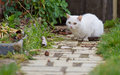 White cat in the garden Royalty Free Stock Photos