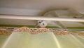 White cat hiding on curtain rod odd eyed Stock Images