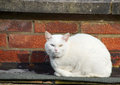 White Cat on a ledge Stock Images