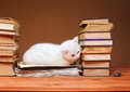 White cat looking at the plush mouse on books Stock Photos