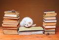 White cat looking at the plush mouse on books Royalty Free Stock Image