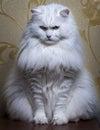 Biely mačka