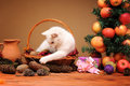 White cat playing with a plush mice Royalty Free Stock Photo