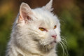 White cat portrait in outdoor Stock Photo
