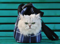 White cat sitting in a bag for the animals on bench Royalty Free Stock Image