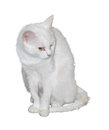 White cat sitting with yellow eyes on a background Royalty Free Stock Photos