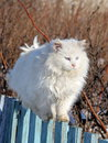 White cat walking on fence Stock Image