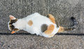 White cay top view little cat on old concrete floor background Stock Photography