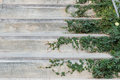 White cement stairs covered green leaves ivy plant. greenery house home decoration design idea. Royalty Free Stock Photo