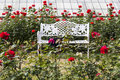 White chairs on red rose gardens Royalty Free Stock Photo