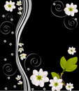White cherry flower design on black Stock Photos