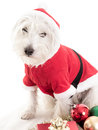 White Christmas Puppy Dog Royalty Free Stock Photo