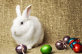 White clean beautiful Easter bunny next to a wicker basket with eggs in the background krashenyymi natural burlap cloth Royalty Free Stock Photo