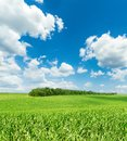 Clouds in blue sky and green grass field