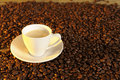 White coffee cup between beans Royalty Free Stock Photography