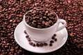 White coffee cup filled with roasted beans Royalty Free Stock Photo
