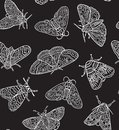 White contour butterflies and moths isolated on black background. Vector surface design Royalty Free Stock Photo