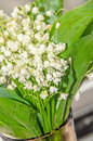 White Convallaria flowers, bouquet with green leafs, close up