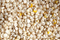 White Corn Kernels Stock Photo