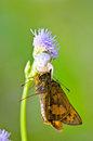 White crab spider captured butterfly flower grass Stock Photo