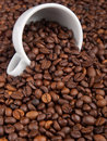 A white cup with many coffee beans on coffe background Stock Image