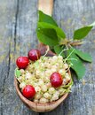 White currant berries and cherries