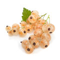 White currant Royalty Free Stock Photo